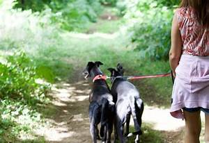 Purrfect tails hull east yorkshire for Professional dog walking service
