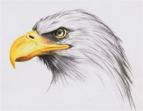 drawn animal artistic drawing pencil   color drawn