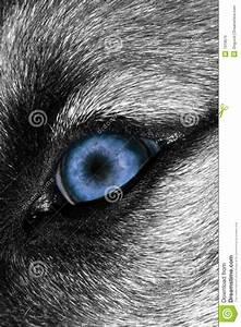 Wolf, Eye