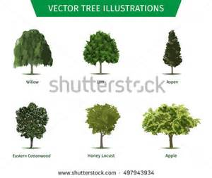 different tree sorts names illustrations tree stock vector 507182185