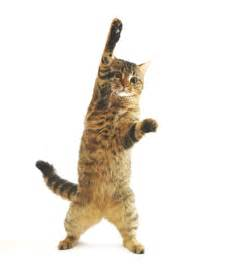 Cat with Paw Up