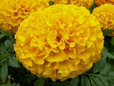 Creative Kitchen Storage Ideas - 7 ways to use marigold flowers diy network blog made remade diy