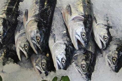 frozen fish fresh arthritis disorder consumption omega finds joint study link between