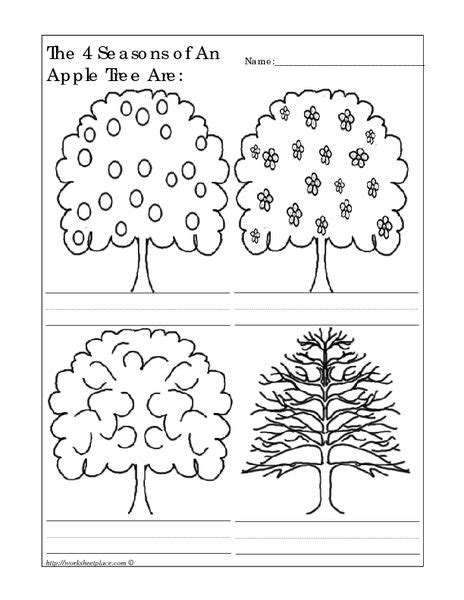 the 4 seasons of an apple tree are worksheet lesson