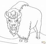 Coloring Bison Clipart Angry Printable Drawing Animal Super sketch template