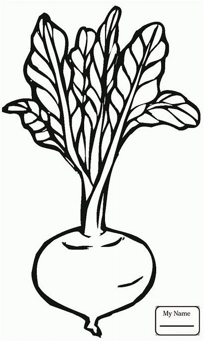 Coloring Pages Vegetables Vegetable Beetroot Clipartmag