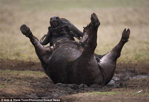 rolling   deep cape buffalo    dirty