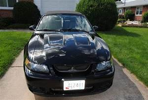 2003 Mustang Terminator Cobra convertible!! No reserve!!! for sale in Frederick, Maryland ...