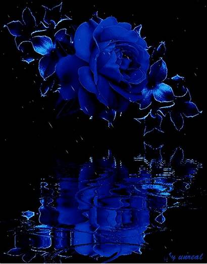 Rose Rain Water Roses Lovethispic Flowers Animated