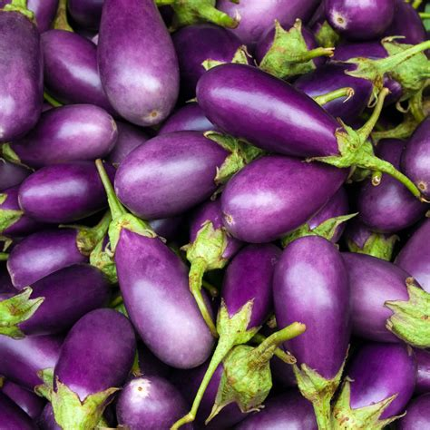 aubergine cuisiner eggplant wickedfood