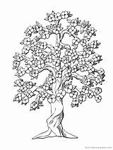 Cherry Coloring Blossom Tree Pages Blossoms Printable Colouring Flower Trees Adults Leaf Spring Floral sketch template