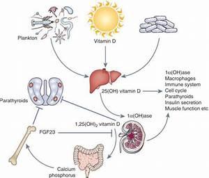 Vitamin D Supplementation After Renal Transplantation  How Much Vitamin D Should We Prescribe