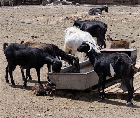 Goat Farming Project Report