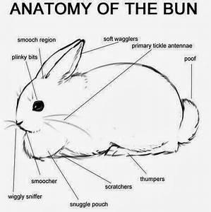 rabbit ramblings bunny anatomy With rabbitdiagram