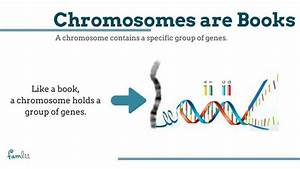 What Is A Chromosome  Simple Definitions For Understanding
