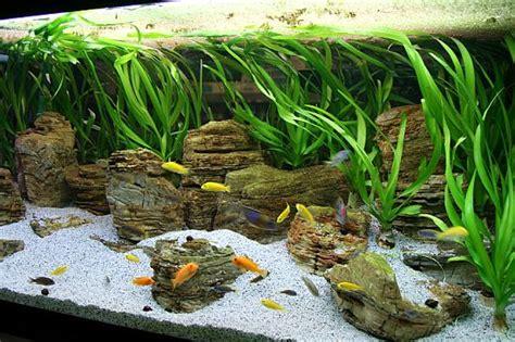 Aquascaping Cichlid Aquarium by Fish Tanks Aquascaping Malawi Lake By Oliver Knott