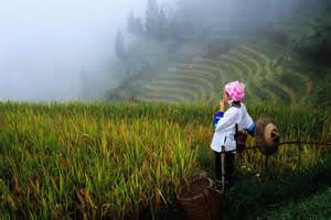 China Rice Fields