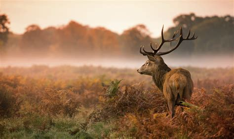 essential wildlife photography tips