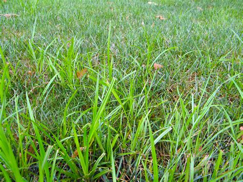 Lawn Weeds And Control