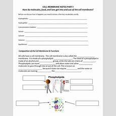 10 Best Images Of Cell Membrane Diagram Worksheet  Cell Membrane Diagram Labeled, Cell Membrane