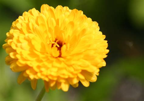 alle verschillende bloemen bloemen soorten lijst halve parasol