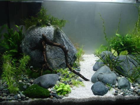 Aquascaping Forum - 45 l nano der weg ist das ziel aquarienvorstellung