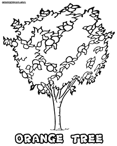 tree coloring pages coloring pages    print