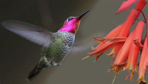 free bird photography contest top 10 photographs week 1