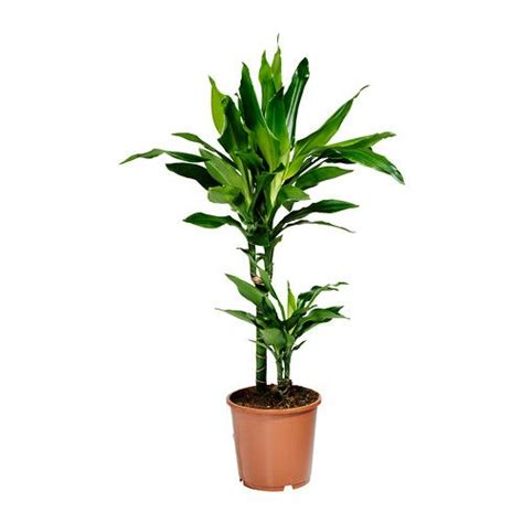 low light indoor plants safe for cats ikea potted plants and plants on pinterest