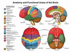 Neuroanatomy-A Primer(1)