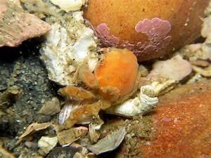 True Crabs Menu
