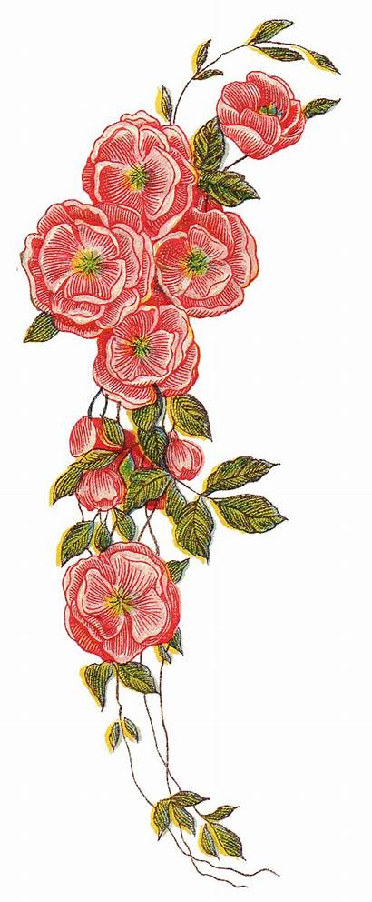 Floral Google Flowers Roses Clipart Mail Flower