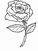 Coloring Rose Pages Flowers Printable Flower Single sketch template