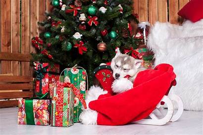 Christmas Puppies Wallpapers Theme Puppy Holiday Tab
