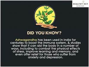 Ashwagandha Is One Of The Most Important Herbs In Ayurveda And Used To Treat A Wide Variety Of