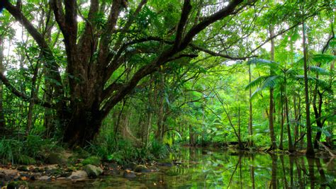 nature green trees peaceful river hd wallpaper