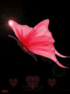 Animated Butterfly Wallpaper Gif - beautiful butterfly animated wallpaper