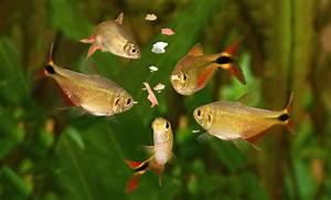 Lebendfutter Für Fische : aufbewahrung von aquarium lebendfutter haustier blog ~ Watch28wear.com Haus und Dekorationen
