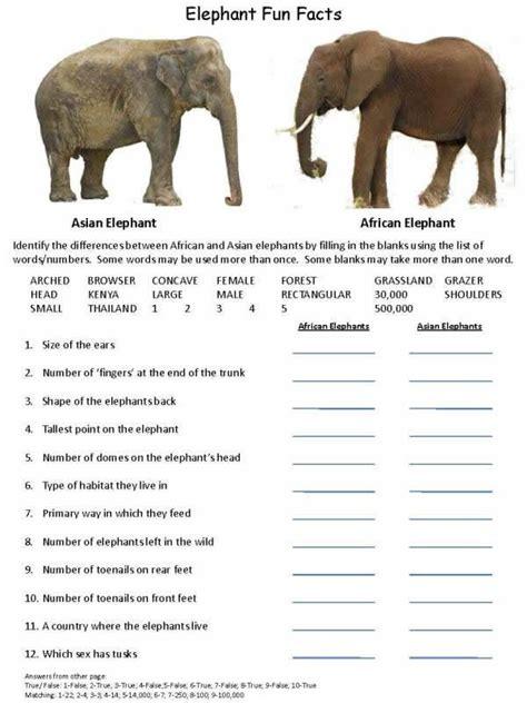 elefun wildlife research conservation