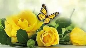 Yellow Roses      Music Michel Pepe