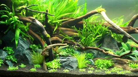 aquascape natural ground youtube