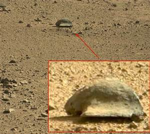 UFO SIGHTINGS DAILY: Tortoise-Like Creature Found By Mars ...