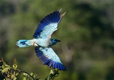 critter sitters blog european birds