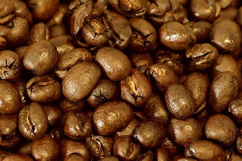 Peaberry Coffee Beans, Close Up.jpg Java Coffee Logo Australia Montclair Dublin Airport Dancer Wiki Mooresville Earth Cafe