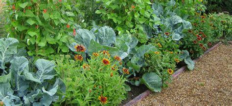 Companion Planting For The Veggie Garden