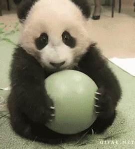 It's my ball... mine. - GIF on Imgur