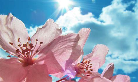 fiori per terrazzi al sole fiori resistono al sole per balcone terrazzo e
