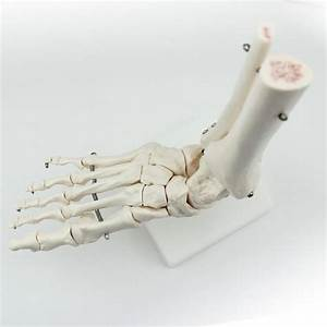 Life Size Foot Joint Anatomical Skeleton Model Human