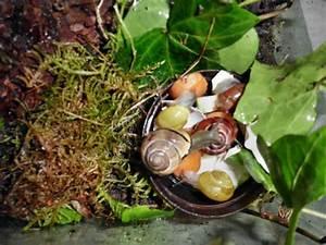 Was Fressen Schnecken : einrichten eines schnecken terrariums ~ Orissabook.com Haus und Dekorationen