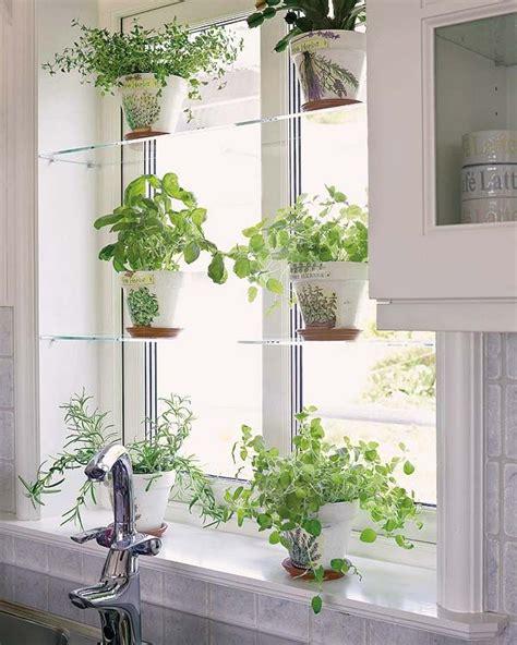 Kitchen Window Plants by Glass Shelves White Pots Decorating W Houseplants